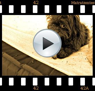 Bolonka Zwetna Hundezucht Matratzentest